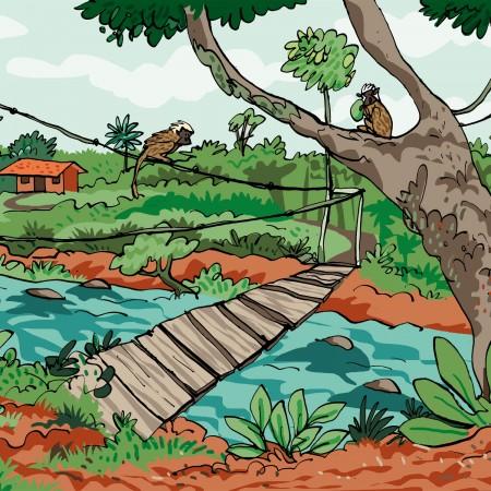 cotton top tamarin reserve