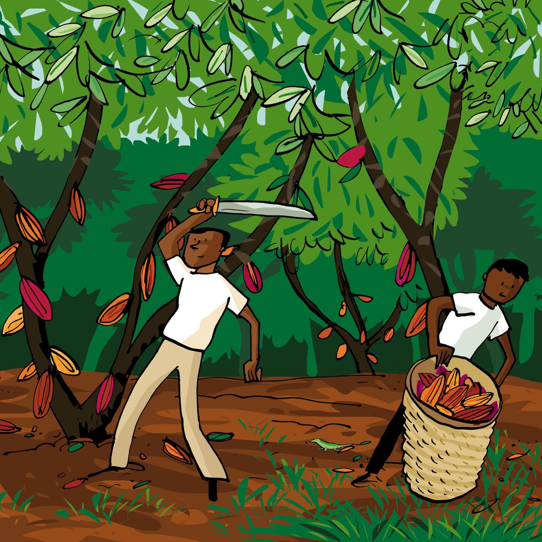 fairtrade cacao