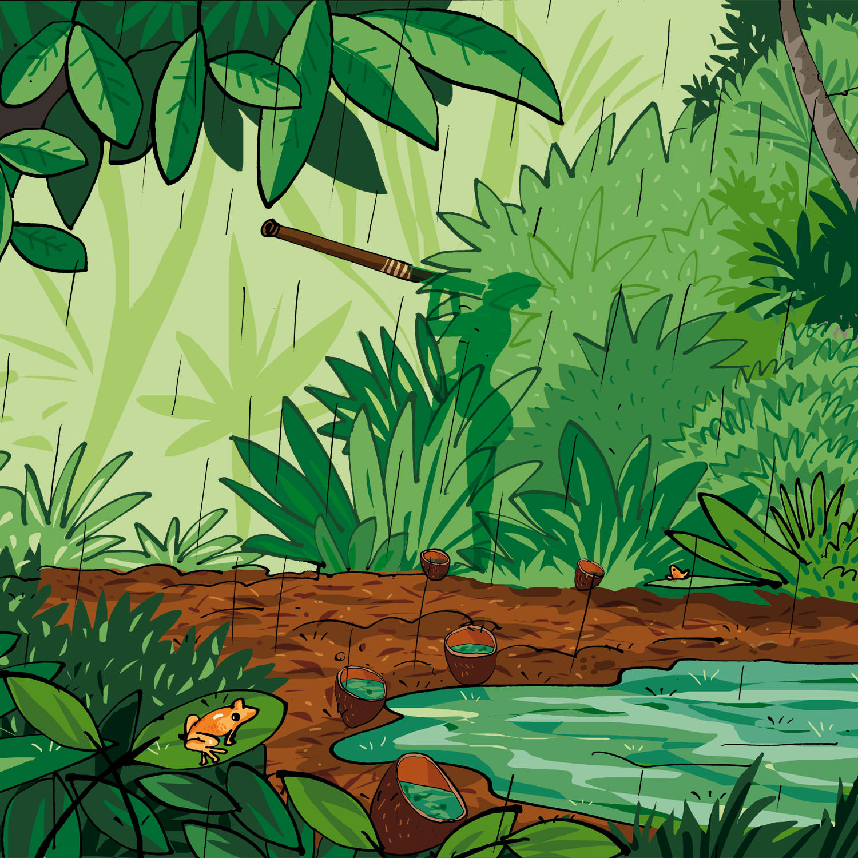 goldenpoisonarrowfrogreserve
