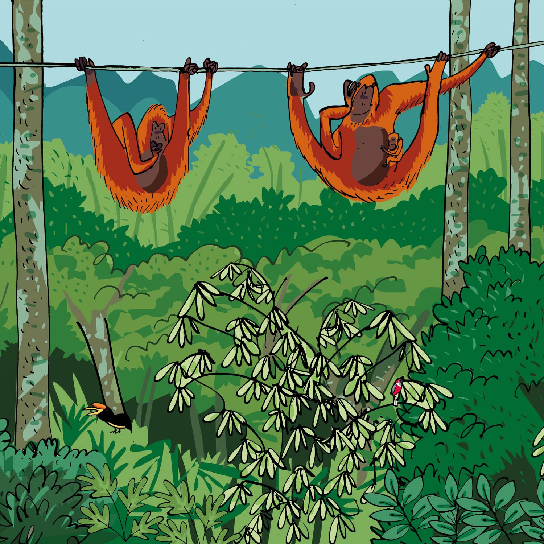 orangutansborneo